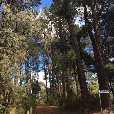 Red Hill Bushland Reserve
