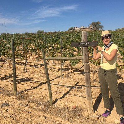 Organic vineyard only 35 minutes away from Madrid