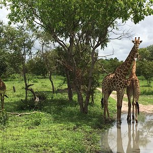 Want to go on Safari ? We'll get you to Fathala in Senegal (near Gambia border) !