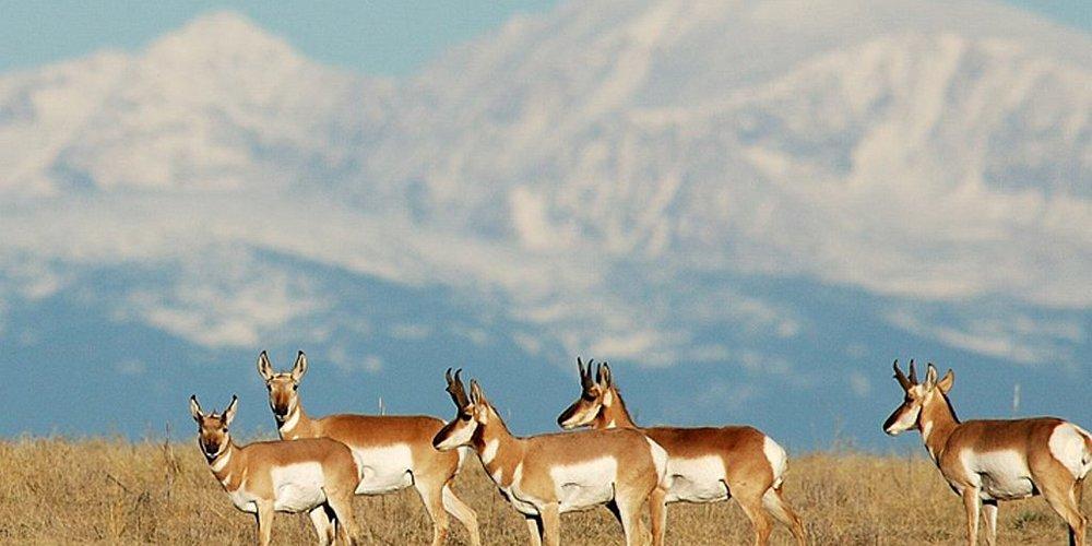 Front Range Wildlife