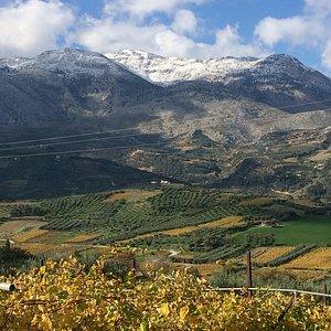 Autumn in Kato Asites. Vineyards!