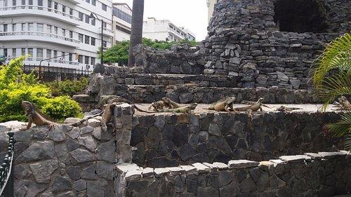 Guayaquil, Ecuador, Parque de Las Iguanas.