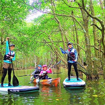 SUPやカヌーでマングローブに冒険に出かけよう。