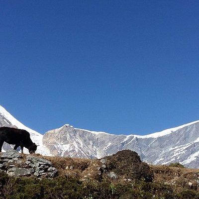 Near Kalopani - Jomsom Trekking Nepal