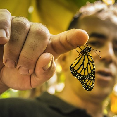 a butterfly that just came out of the cocoon