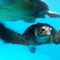 vista das tartarugas pelos visores no tunel do tanque ilhas