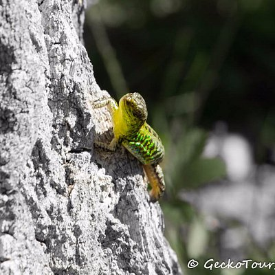 GECKO TOURS SPLIT