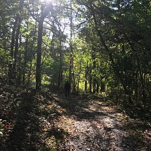 Borden pond path