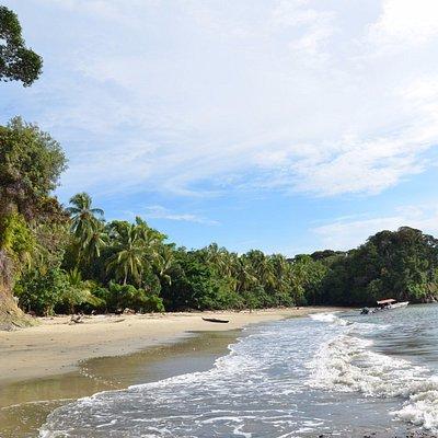 Golden sand beach of Playa Juan de Dios. Lush tropical forest at the edge of the ocean.