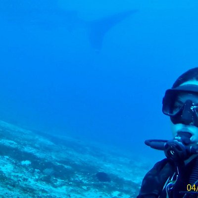 Sarah & Richard, dive with the whalesharks in manta shoal ticao island  ( bicol dive center )