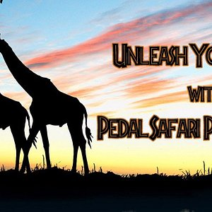 Unleash Your Party with pedal Safari Party Bikes