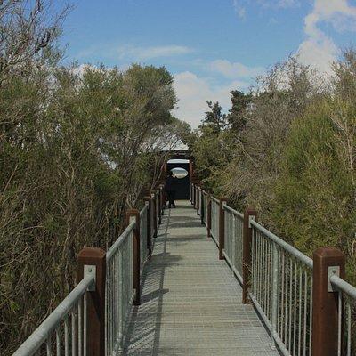 Lake Muir Boardwalk