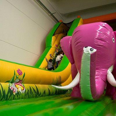 Abbiamo anche un elefante rosa!