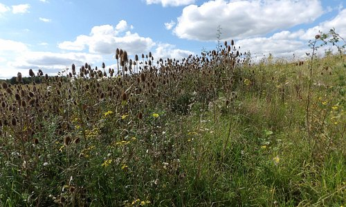 lots of nature and wild flowers  to be seen here .