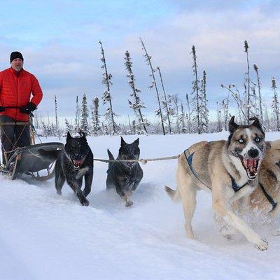Anchorage 1/2 Day Dog Mushing School