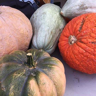 Best lookin pumpkinsin town!