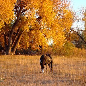 Fall time with the horses in the pasture nextdoor.