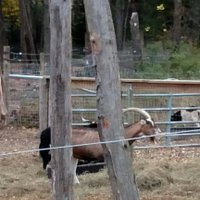 Ready made Zoo with Camel, Goat, fowl, fun!  At Shawano's Annelo's Torch Lite