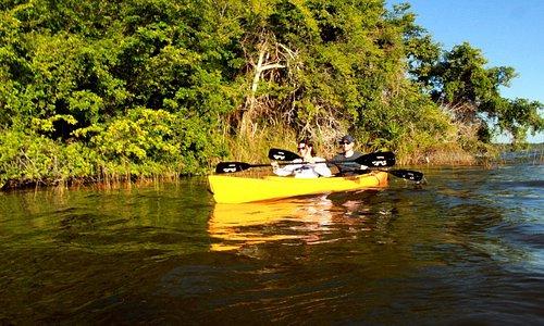 Jaguar Rainforest Kayak Adventure