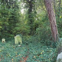 The overgrown area around our family grave