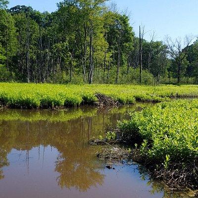 Trails behind Nature Preserve