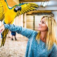 NAJWIĘKSZA Papugarnia w Polsce południowej 😍