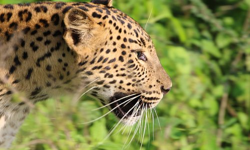 Yala National Park is situated in the south-east region of Sri Lanka and is the 2nd largest Nati