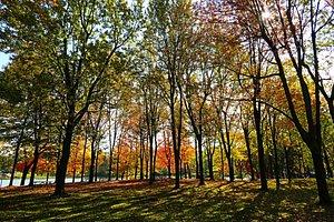 Les arbres en automne!