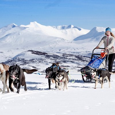Mushing in the mountains with spactacular view