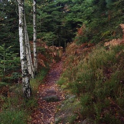 Montée en forêt vers le site de Bure.