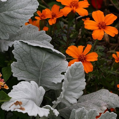 Kurpark flowers