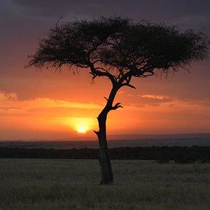 Amazing sunset in the Masai Mara.