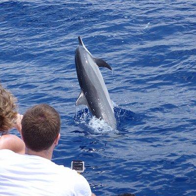 Les dauphins viennent tout près faire leurs sauts