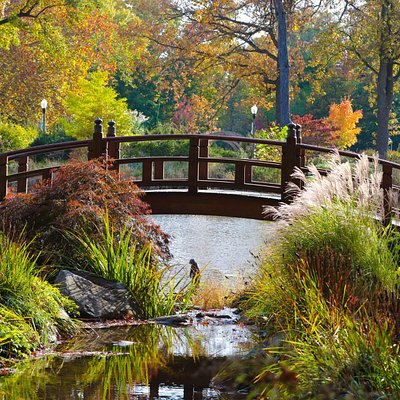 Japanese Bridge in the fall (courtesy of Lindahl Photography)