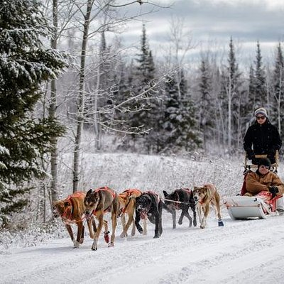 Drive your own sled dog team!