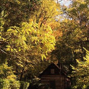 This cute log cabin is on the border of Reynolda Gardens.