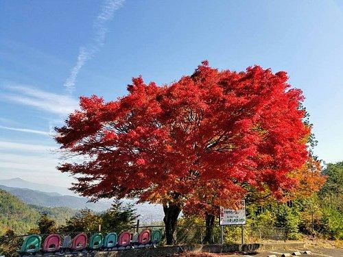 Fall foliage at Ogurayama Lookout