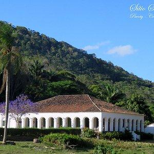 Floração da Caroba (Jacaranda brasiliana)