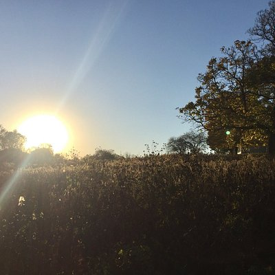 Beautiful sunset on a Fall day lends itself to a walk at Stroud Preserve with someone special.