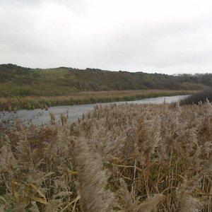 Rietvelden naast het water