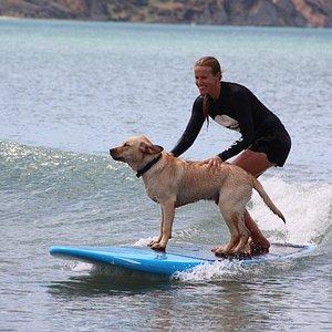 Surf Coach Liz teaching her Dog Benny to Surf! If I can teach my dog, I can teach you!