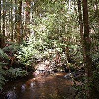 Cuymberland creek, on the Big Tree section of the walk