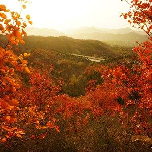 秋天, 紅葉, 到處都是紅葉...