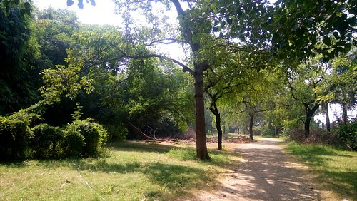 More greenery at the Park