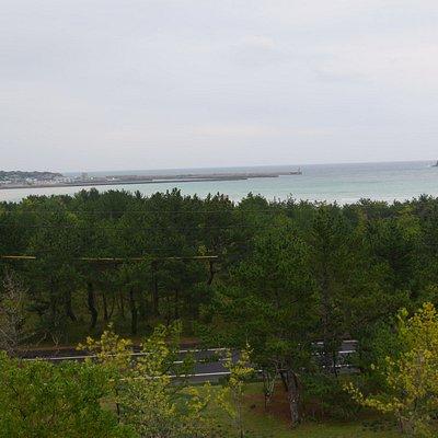 公園からの海の眺め