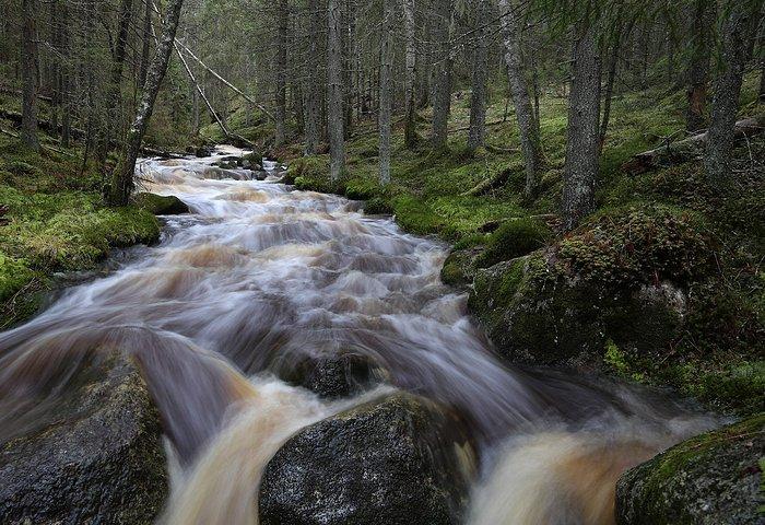 Kauhanevan-Pohjankankaan kansallispuisto