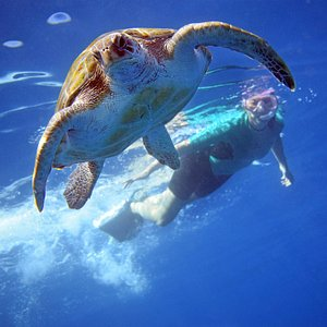 Turtle during snorkelling activity.