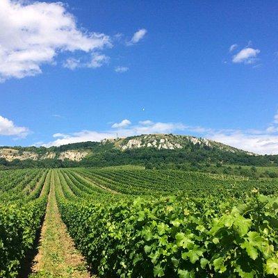 Moravia wine region