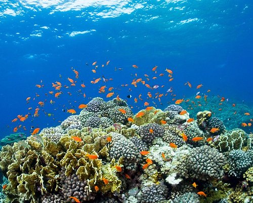 colorful marine life