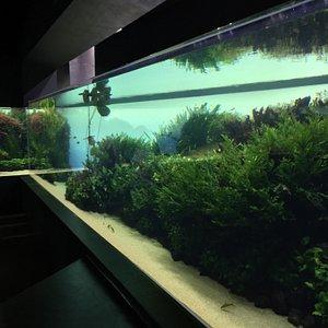 Takashi Amano underwater Forrest gardens